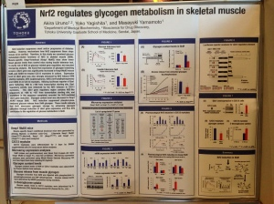 Muscle Glycogen