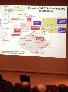 Nrf2 Intermediary Metabolism Slide
